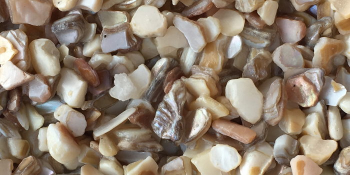 TERRAZZCO Exotic Shell Aggregates